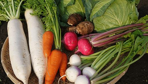 年間を通して野菜・果物の収穫が楽しめる
