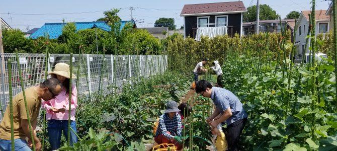 ポモナ農園 もうすぐ貸農園会員期間の開始