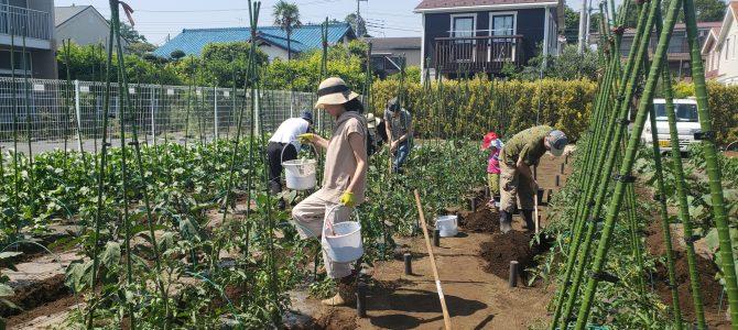 貸農園作業 果菜類の追肥
