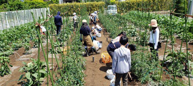 2020年度 体験型貸農園会員募集