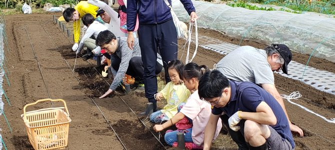 【貸農園作業】小松菜、ほうれん草、春菊、ルッコラ、カブの種まき